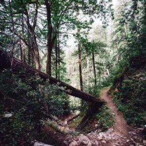 Trail-8km-Aiguilles Trail de SP